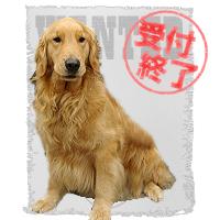 わんのはな 愛犬ボーノ 擬人化 募集