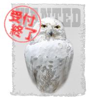 フクロウ 擬人化 募集