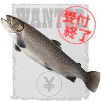 祝魚(岩魚) 擬人化 募集