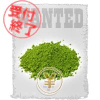 静岡抹茶 擬人化 募集