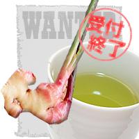 緑茶&金時生姜 擬人化 募集