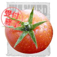 トマト擬人化 募集